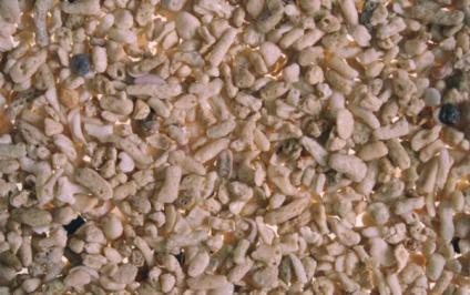 20110417131820-a14002-coral-medio-web